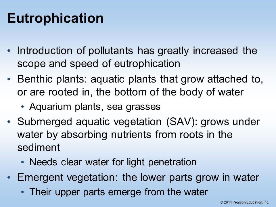 © 2011 Pearson Education, Inc. Eutrophication Introduction of pollutants has greatly increased the scope and speed of eutrophication Benthic plants: a