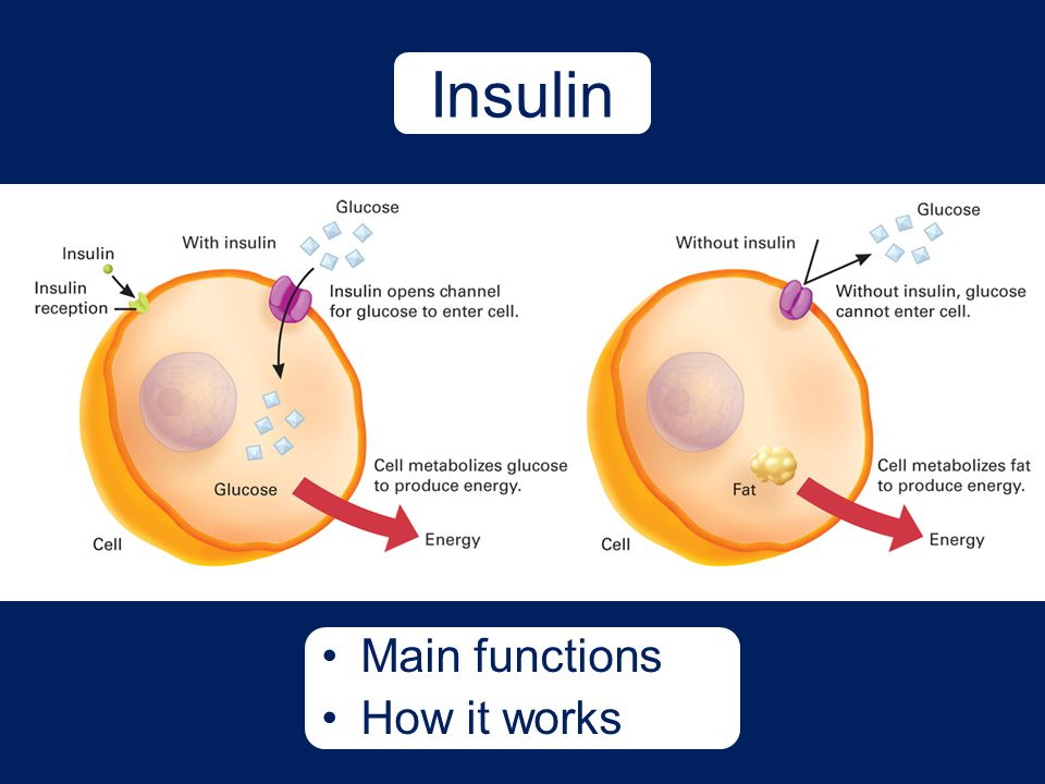 Insulin Main functions How it works
