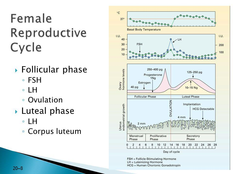 20 – 8  Follicular phase ◦ FSH ◦ LH ◦ Ovulation  Luteal phase ◦ LH ◦ Corpus luteum