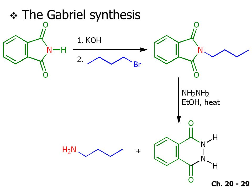 Ch. 20 - 29  The Gabriel synthesis