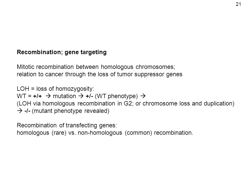 21 Recombination; gene targeting Mitotic recombination between homologous chromosomes; relation to cancer through the loss of tumor suppressor genes LOH = loss of homozygosity: WT = +/+  mutation  +/- (WT phenotype)  (LOH via homologous recombination in G2; or chromosome loss and duplication)  -/- (mutant phenotype revealed) Recombination of transfecting genes: homologous (rare) vs.