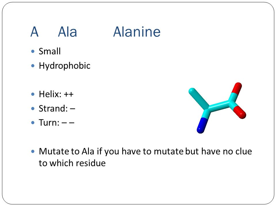 AAlaAlanine Small Hydrophobic Helix: ++ Strand: – Turn: – – Mutate to Ala if you have to mutate but have no clue to which residue