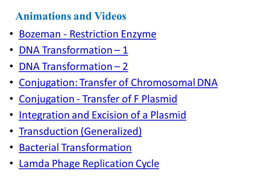 Animations and Videos Bozeman - Restriction Enzyme DNA Transformation – 1 DNA Transformation – 2 Conjugation: Transfer of Chromosomal DNA Conjugation