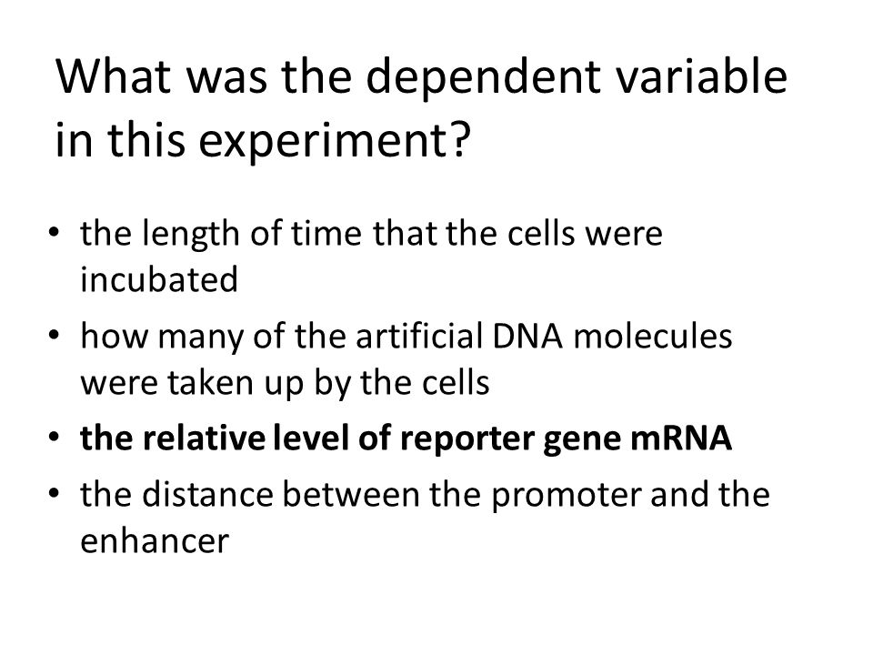 What was the dependent variable in this experiment? the length of time that the cells were incubated how many of the artificial DNA molecules were tak