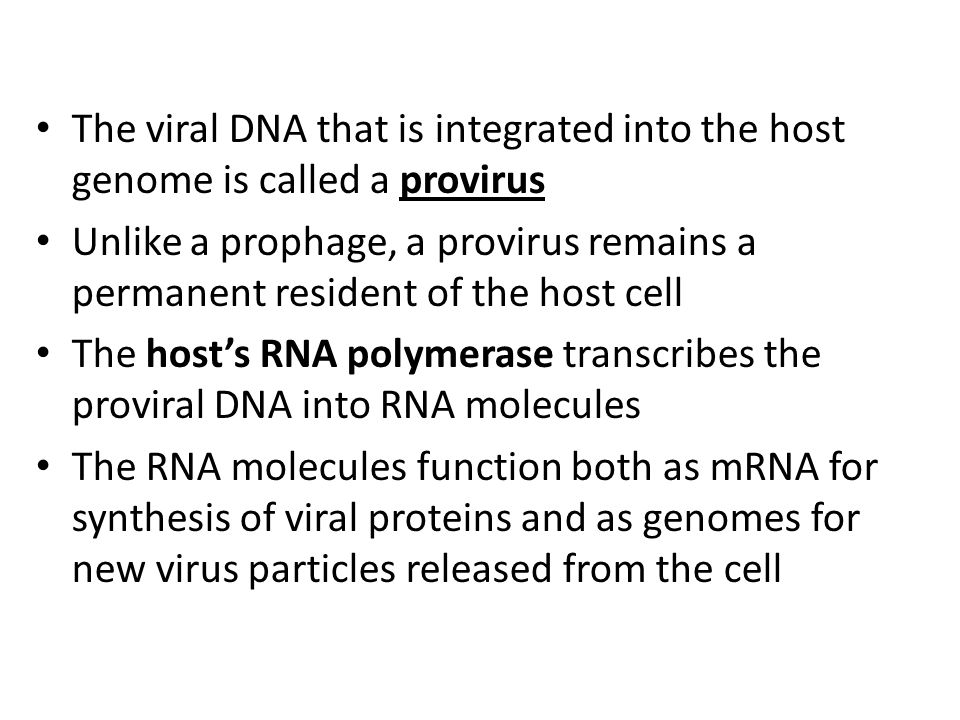 The viral DNA that is integrated into the host genome is called a provirus Unlike a prophage, a provirus remains a permanent resident of the host cell