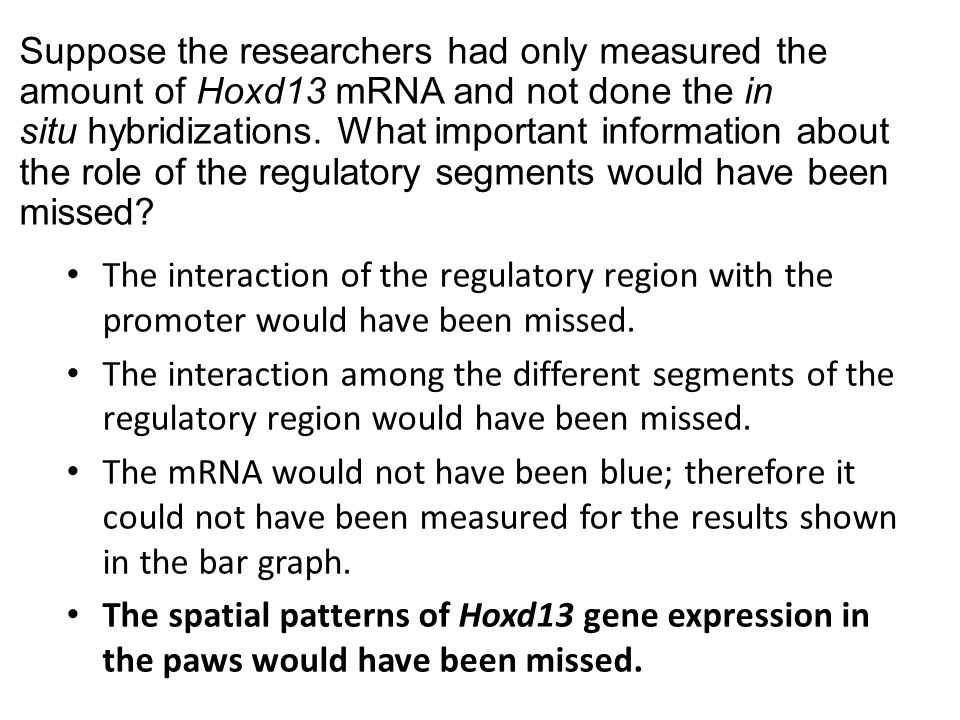 Suppose the researchers had only measured the amount of Hoxd13 mRNA and not done the in situ hybridizations. What important information about the role