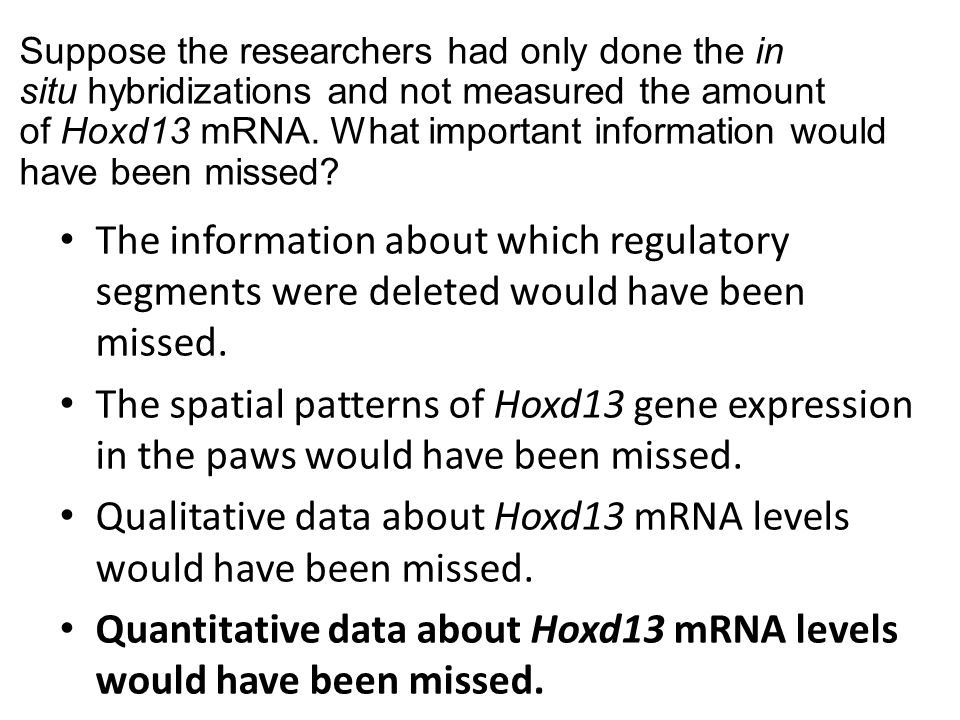 Suppose the researchers had only done the in situ hybridizations and not measured the amount of Hoxd13 mRNA. What important information would have bee