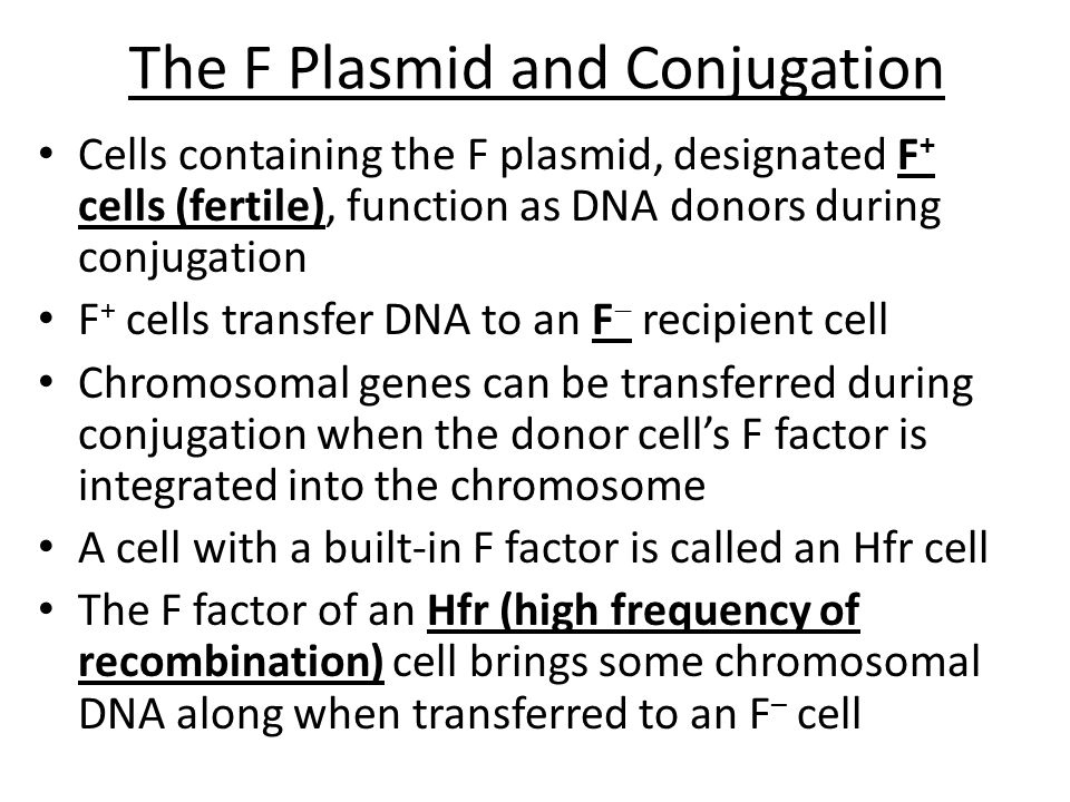 The F Plasmid and Conjugation Cells containing the F plasmid, designated F + cells (fertile), function as DNA donors during conjugation F + cells tran