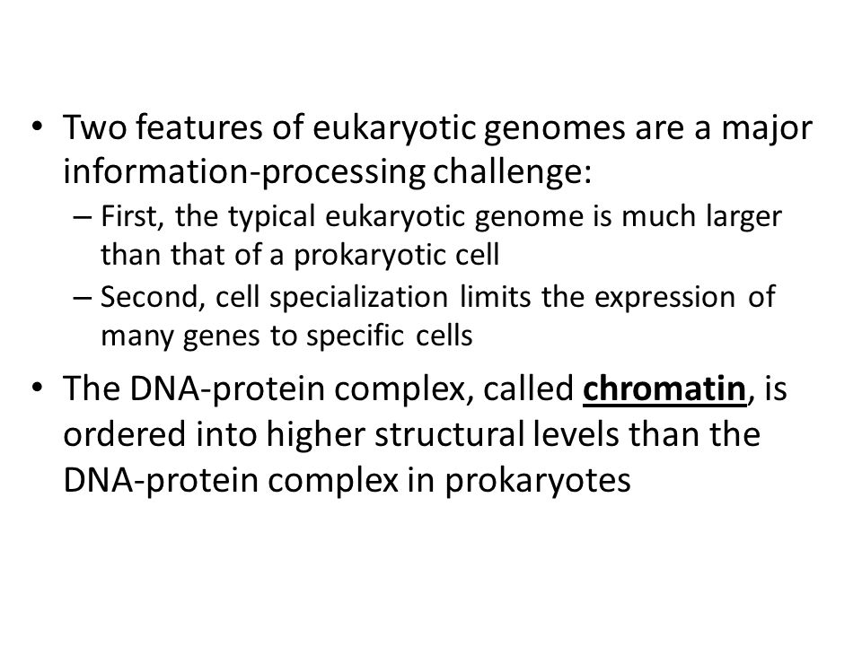 Two features of eukaryotic genomes are a major information-processing challenge: – First, the typical eukaryotic genome is much larger than that of a