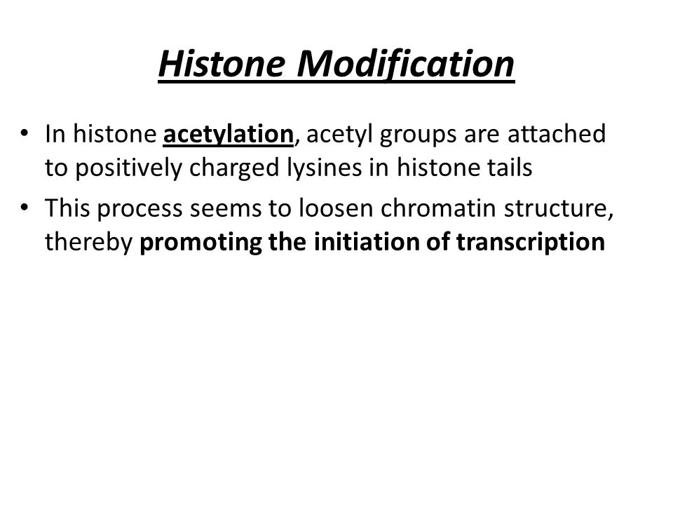 Histone Modification In histone acetylation, acetyl groups are attached to positively charged lysines in histone tails This process seems to loosen ch