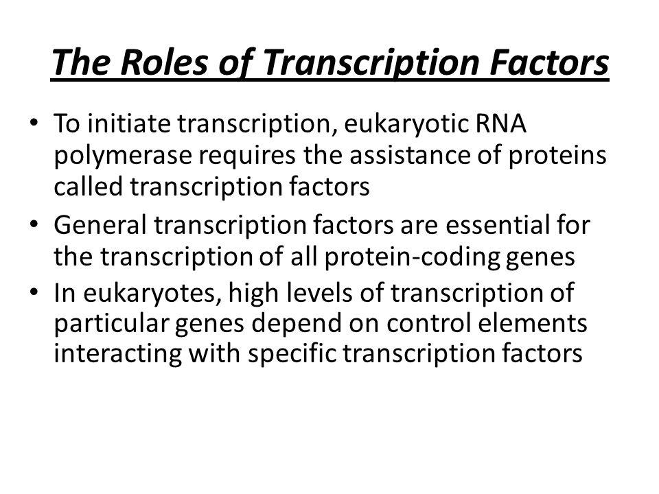 Eukaryotic Transcription Factors Transcription Factors to