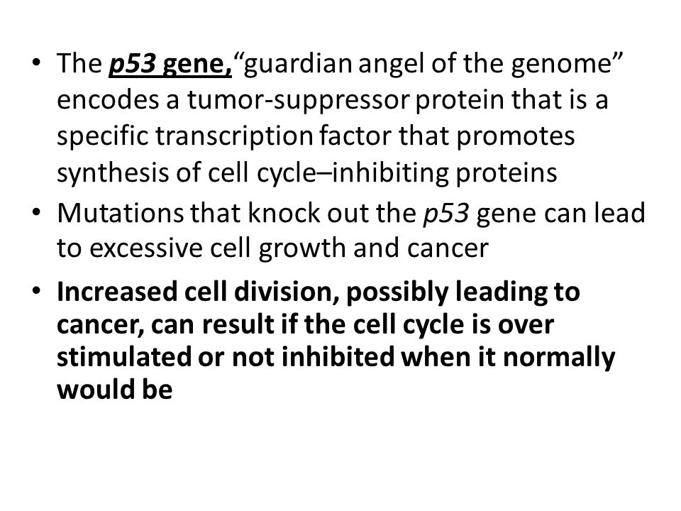 """The p53 gene,""""guardian angel of the genome"""" encodes a tumor-suppressor protein that is a specific transcription factor that promotes synthesis of cell"""
