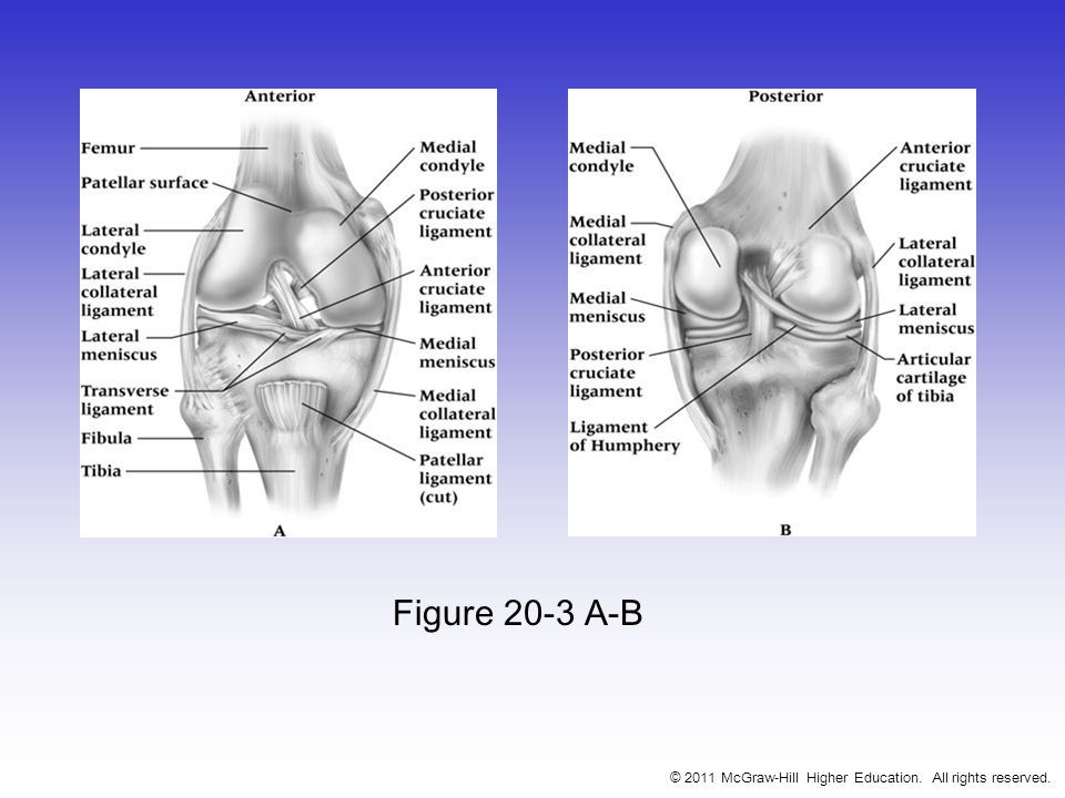 Figure 20-3 A-B © 2011 McGraw-Hill Higher Education. All rights reserved.