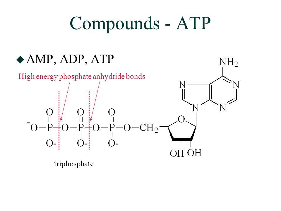 Compounds - ATP  AMP, ADP, ATP High energy phosphate anhydride bonds triphosphate