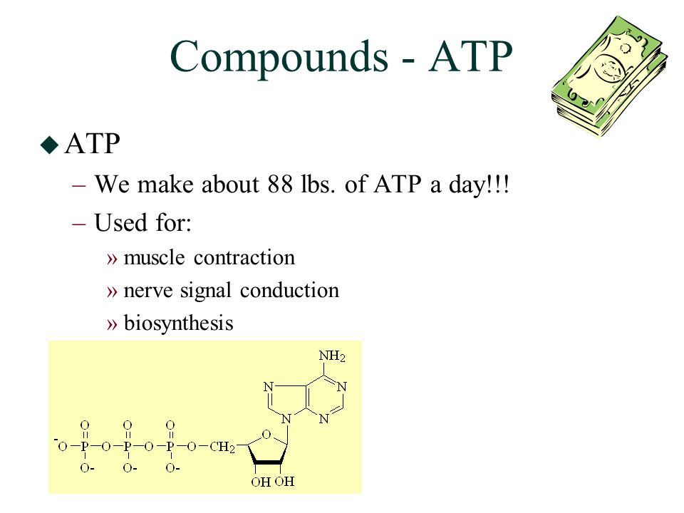 Compounds - ATP  ATP –We make about 88 lbs.of ATP a day!!.