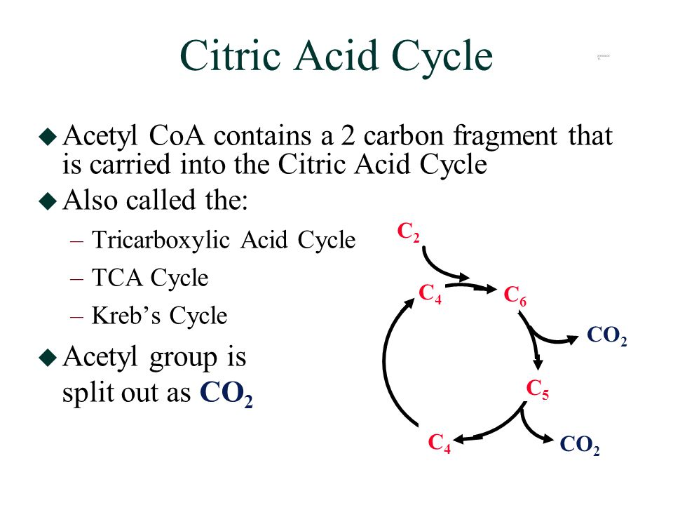 Citric Acid Cycle  Acetyl CoA contains a 2 carbon fragment that is carried into the Citric Acid Cycle  Also called the: –Tricarboxylic Acid Cycle –TCA Cycle –Kreb's Cycle  Acetyl group is split out as CO 2 C5C5 CO 2 C4C4 C4C4 C6C6 C2C2