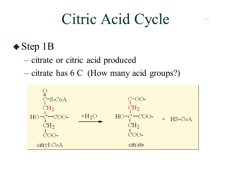 Citric Acid Cycle  Step 1B –citrate or citric acid produced –citrate has 6 C (How many acid groups?)
