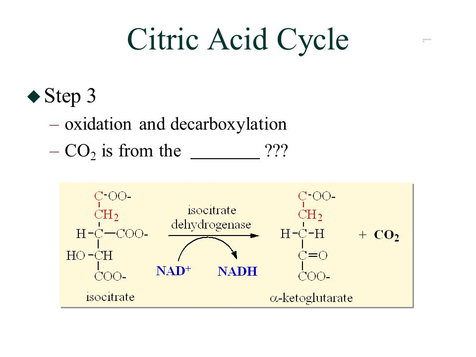 Citric Acid Cycle  Step 3 –oxidation and decarboxylation –CO 2 is from the
