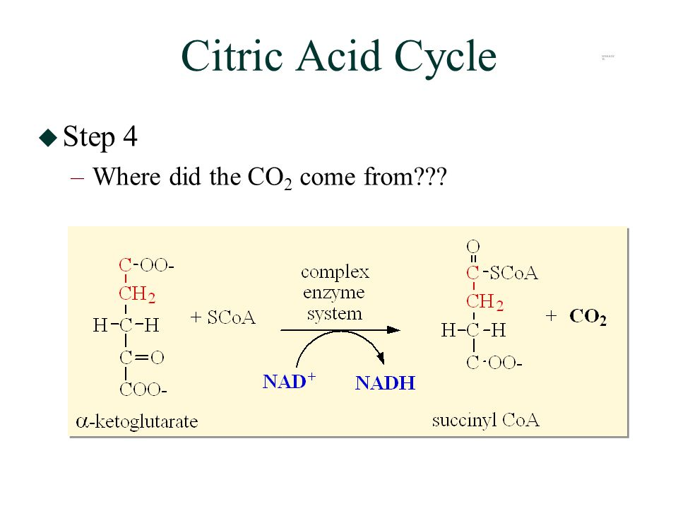 Citric Acid Cycle  Step 4 –Where did the CO 2 come from
