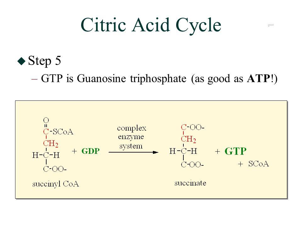 Citric Acid Cycle  Step 5 –GTP is Guanosine triphosphate (as good as ATP!)