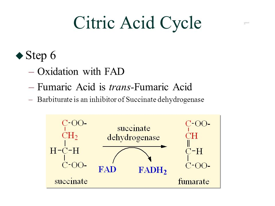 Citric Acid Cycle  Step 6 –Oxidation with FAD –Fumaric Acid is trans-Fumaric Acid –Barbiturate is an inhibitor of Succinate dehydrogenase