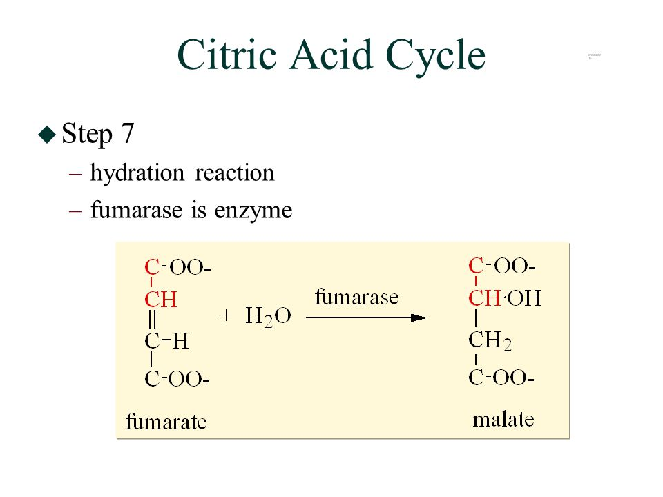 Citric Acid Cycle  Step 7 –hydration reaction –fumarase is enzyme