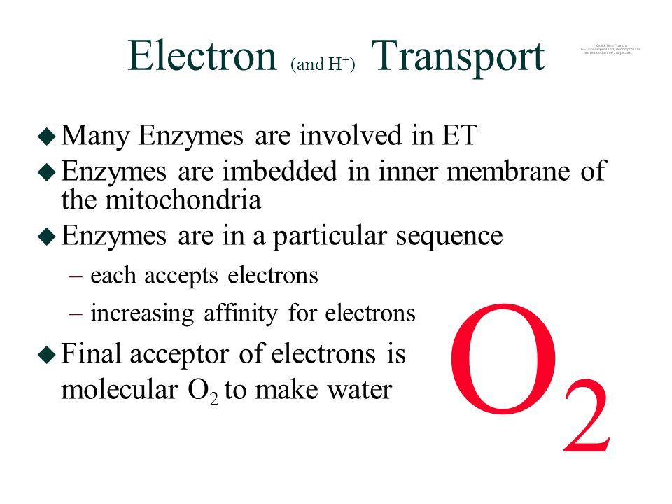 Electron (and H + ) Transport  Many Enzymes are involved in ET  Enzymes are imbedded in inner membrane of the mitochondria  Enzymes are in a particular sequence –each accepts electrons –increasing affinity for electrons  Final acceptor of electrons is molecular O 2 to make water O2O2