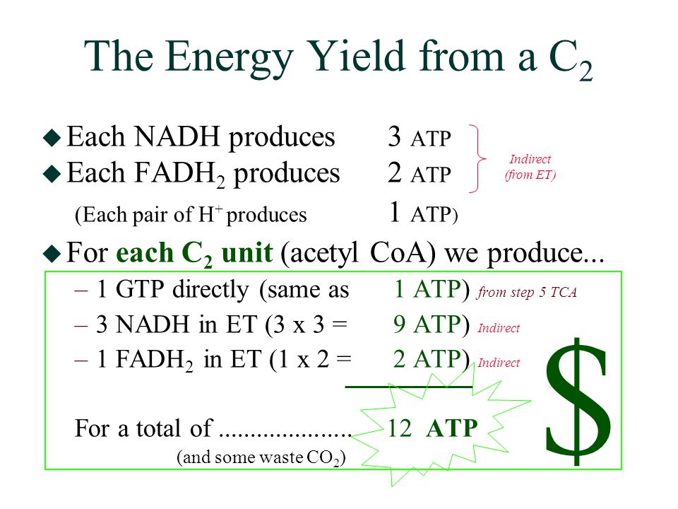 The Energy Yield from a C 2  Each NADH produces 3 ATP  Each FADH 2 produces 2 ATP (Each pair of H + produces 1 ATP )  For each C 2 unit (acetyl CoA) we produce...