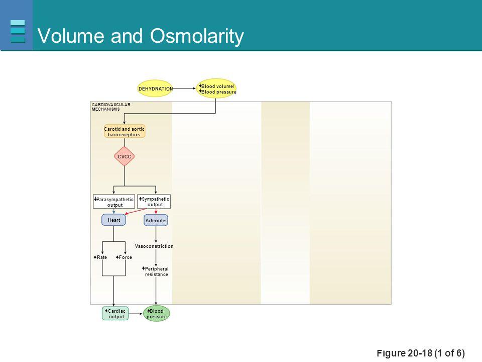 Figure 20-18 (1 of 6) Volume and Osmolarity Blood volume/ Blood pressure CVCC Parasympathetic output Sympathetic output Heart ForceRate Cardiac output
