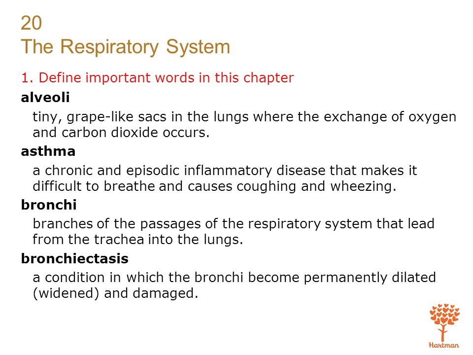 20 The Respiratory System Exam Multiple Choice.Choose the correct answer.