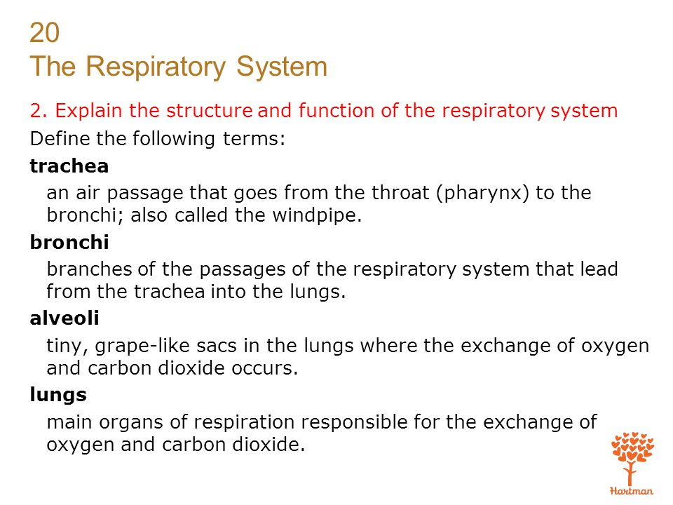 20 The Respiratory System Exam (cont'd.) 11.