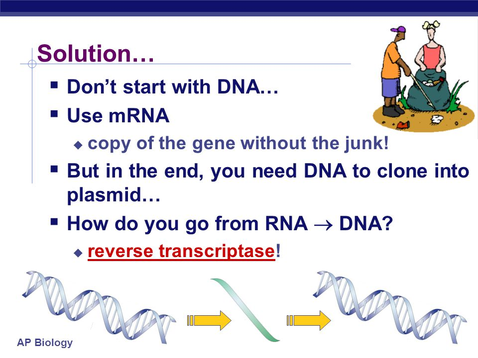 """AP Biology 2005-2006 Problems…  A lot of junk!  human genomic library has more """"junk"""" than genes in it  Introns, introns, introns!  if you want to"""