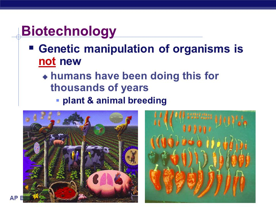 AP Biology 2005-2006 The BIG Questions…  How can we use our knowledge of DNA to:  diagnose disease or defect?  cure disease or defect?  change/imp