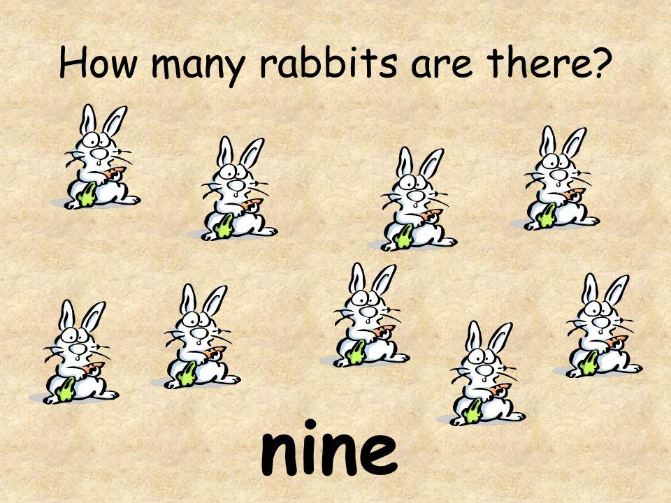 How many rabbits are there? nine