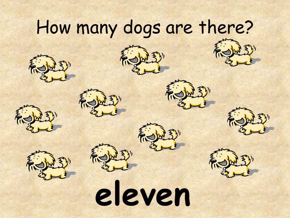 How many dogs are there? eleven