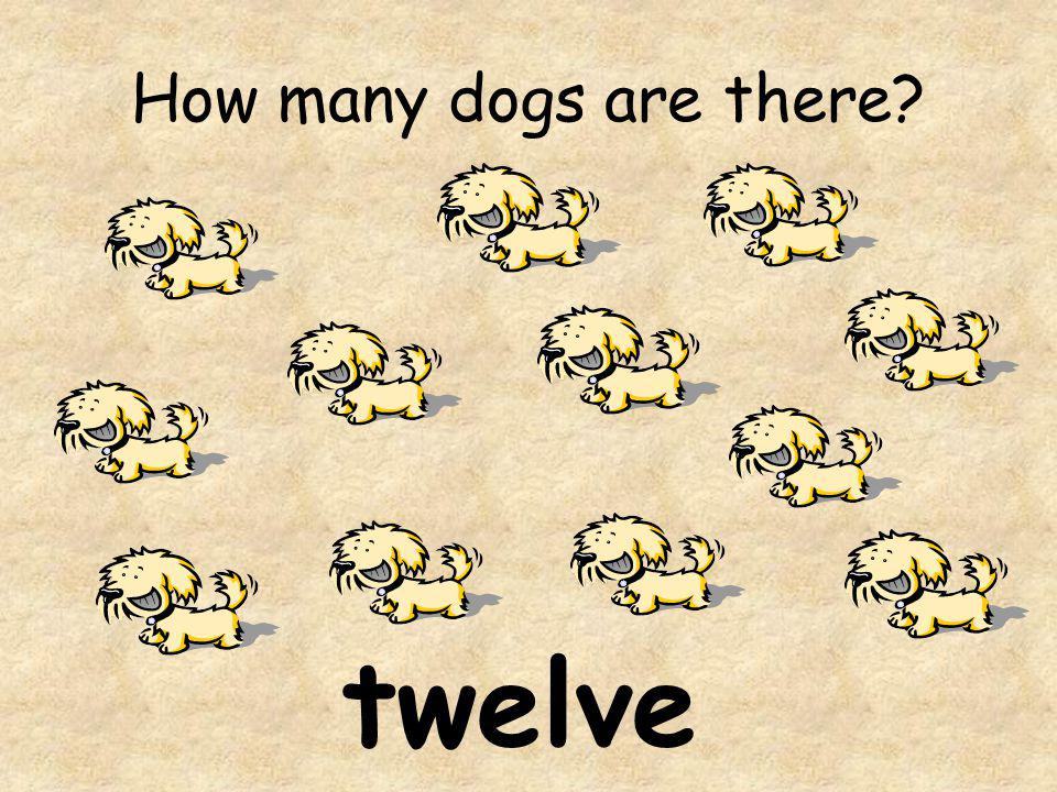 How many dogs are there? twelve