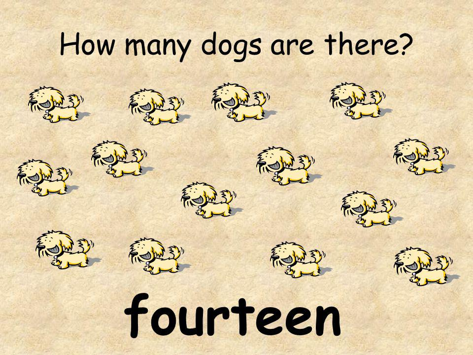 How many dogs are there? fourteen