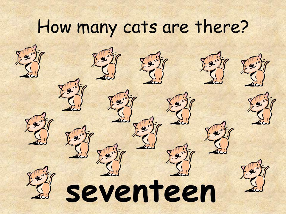 How many cats are there? seventeen
