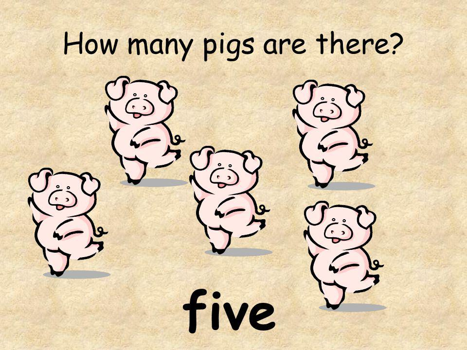 How many pigs are there? five