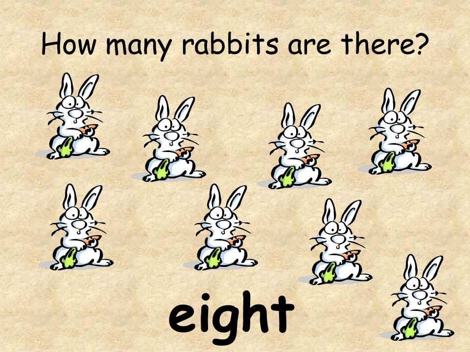 How many rabbits are there? eight
