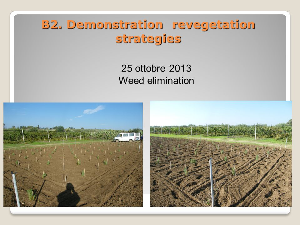 B2. Demonstration revegetation strategies 25 ottobre 2013 Weed elimination