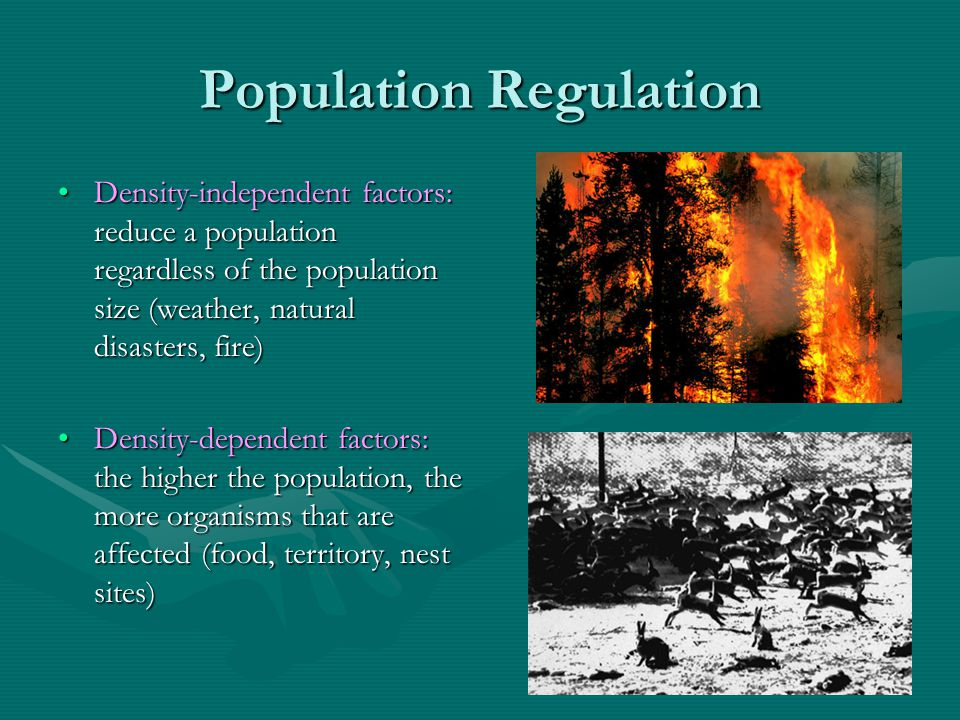 Population Regulation Density-independent factors: reduce a population regardless of the population size (weather, natural disasters, fire)Density-ind