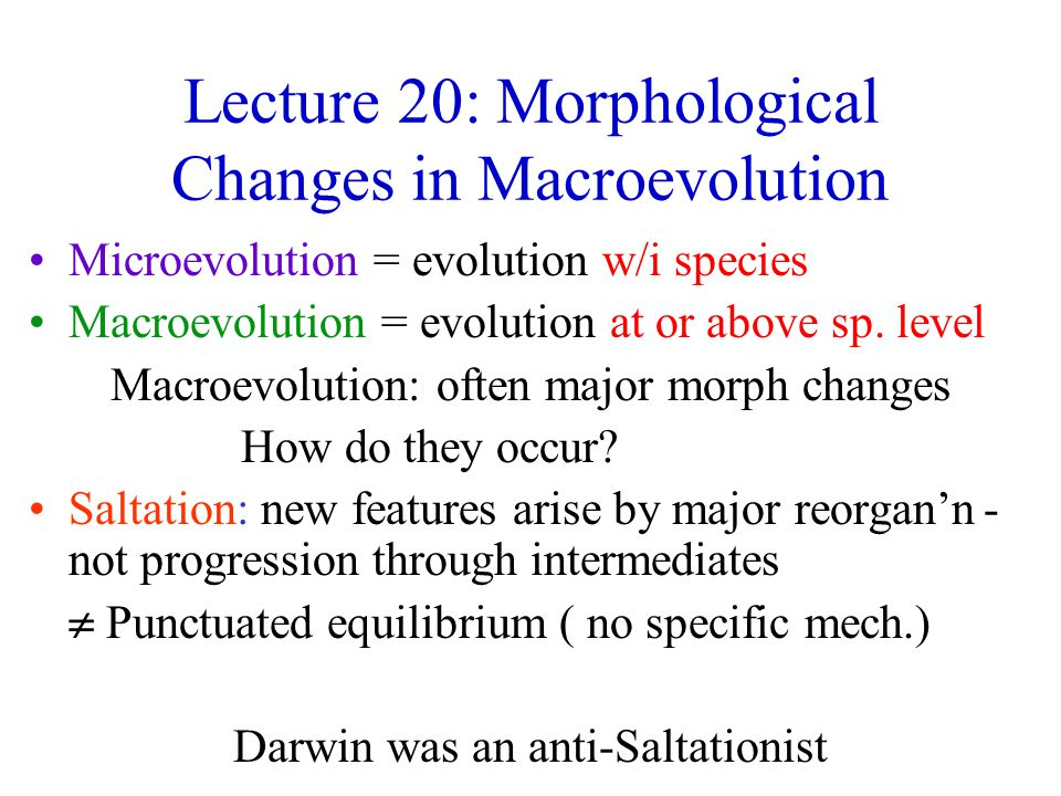 Morphological Changes Completely new features rare: usually modification of ancestral feature e.g.