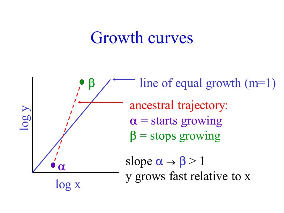 Growth curves log x log y  line of equal growth (m=1) ancestral trajectory:  = starts growing  = stops growing slope    > 1 y grows fast relative to x 