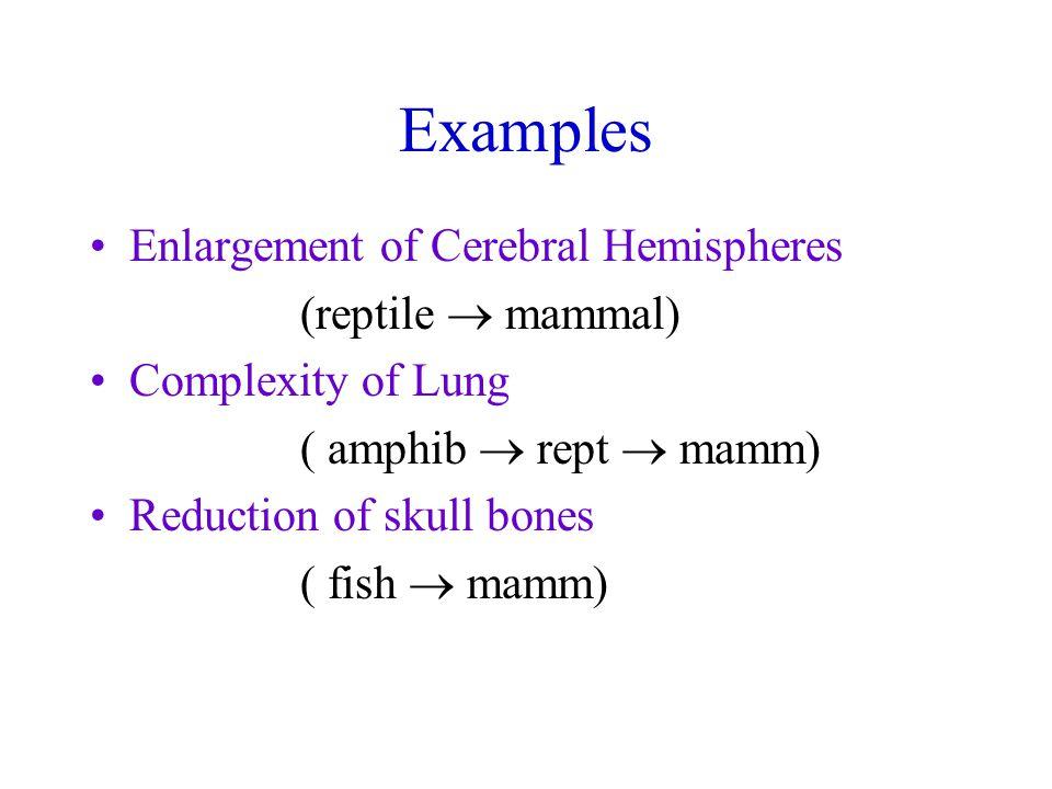 Examples Enlargement of Cerebral Hemispheres (reptile  mammal) Complexity of Lung ( amphib  rept  mamm) Reduction of skull bones ( fish  mamm)