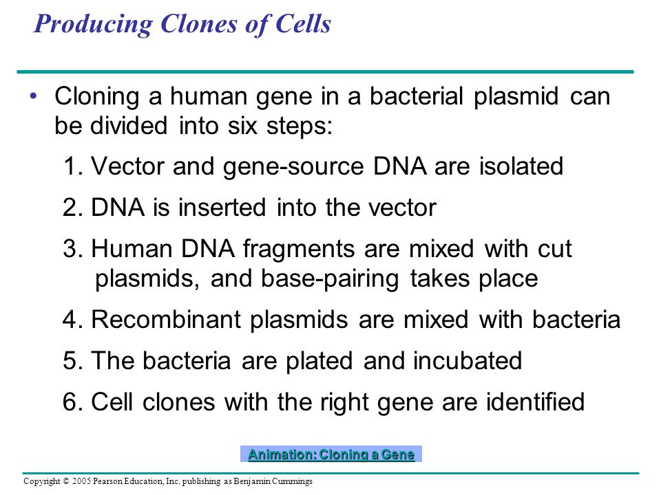 Copyright © 2005 Pearson Education, Inc. publishing as Benjamin Cummings Producing Clones of Cells Cloning a human gene in a bacterial plasmid can be