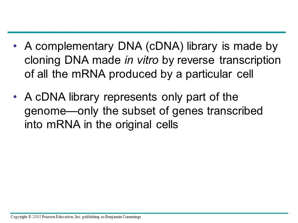 Copyright © 2005 Pearson Education, Inc. publishing as Benjamin Cummings A complementary DNA (cDNA) library is made by cloning DNA made in vitro by re