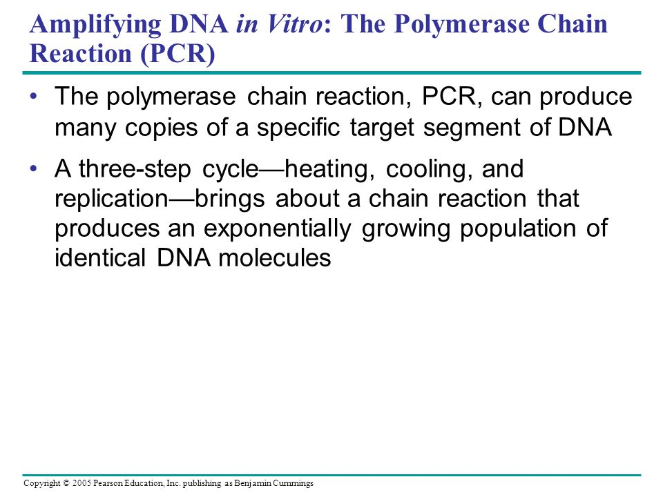 Copyright © 2005 Pearson Education, Inc. publishing as Benjamin Cummings Amplifying DNA in Vitro: The Polymerase Chain Reaction (PCR) The polymerase c