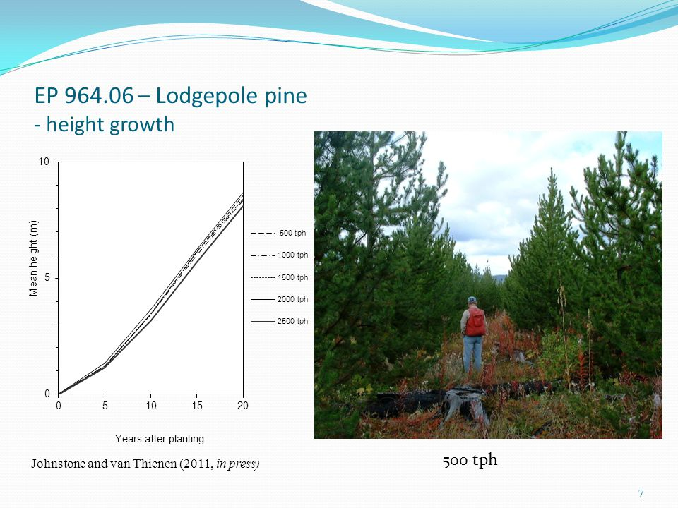 EP 964.06 – Lodgepole pine - height growth 500 tph Johnstone and van Thienen (2011, in press) 7
