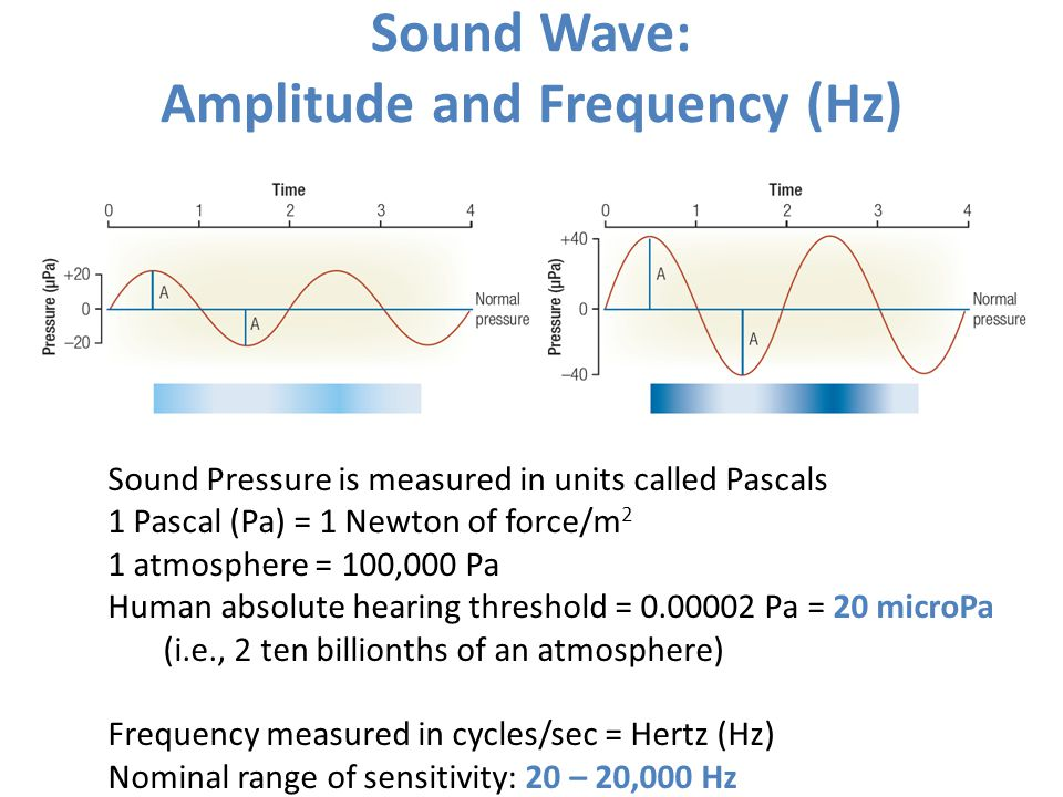 Sound Wave: Amplitude and Frequency (Hz) Sound Pressure is measured in units called Pascals 1 Pascal (Pa) = 1 Newton of force/m 2 1 atmosphere = 100,0